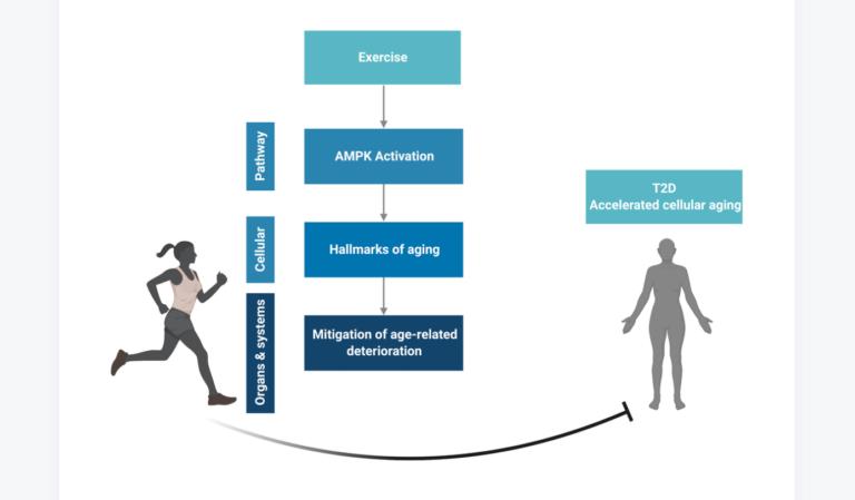 Figure 4. Conceptual overview. Created in BioRender